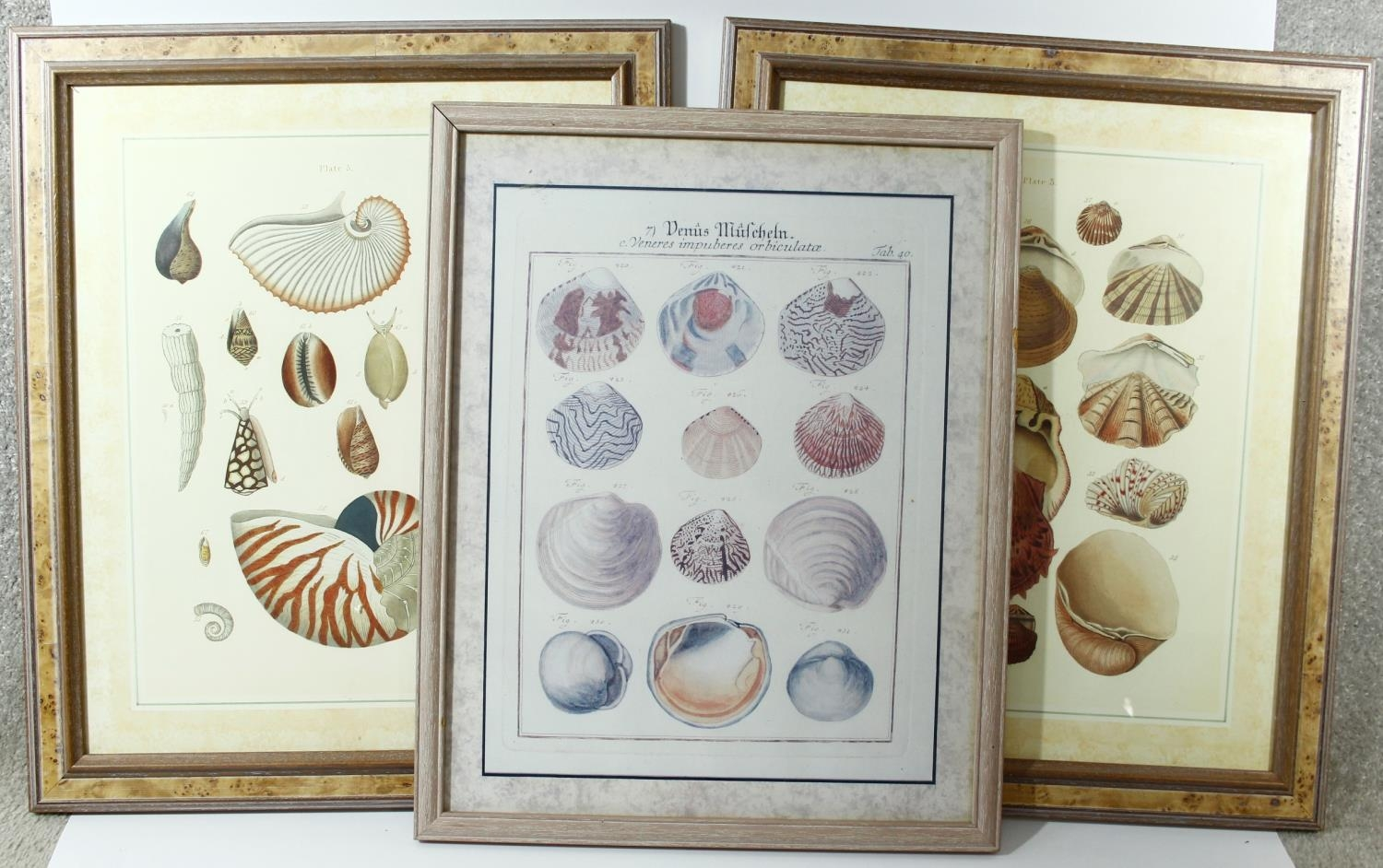 Three framed and glazed contemporary prints of coloured book plates of various species of tropical
