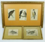 Three framed and glazed antique hand coloured engravings of birds, two by William Home Lizars of '