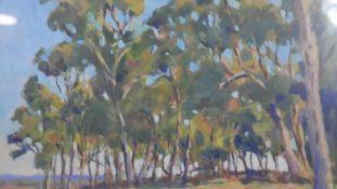 Douglas Kirsop (B.1952), a framed and glazed oil on board, Gum Trees near Cranbrook S.W.