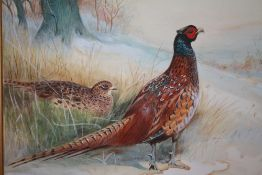 (XX). British school, study of a male and female pheasant in a wooded winter landscape, unsigned,