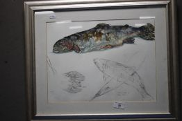 A MOVEMENT SKETCH OF A RAINBOW TROUT