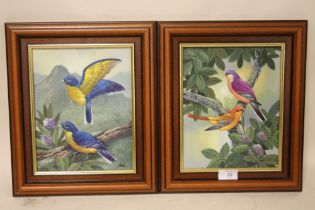 A PAIR OF FRAMED OILS ON BOARDS DEPICTING VIBRANTLY COLOURED BIRDS IN NATURAL SETTINGS ONE