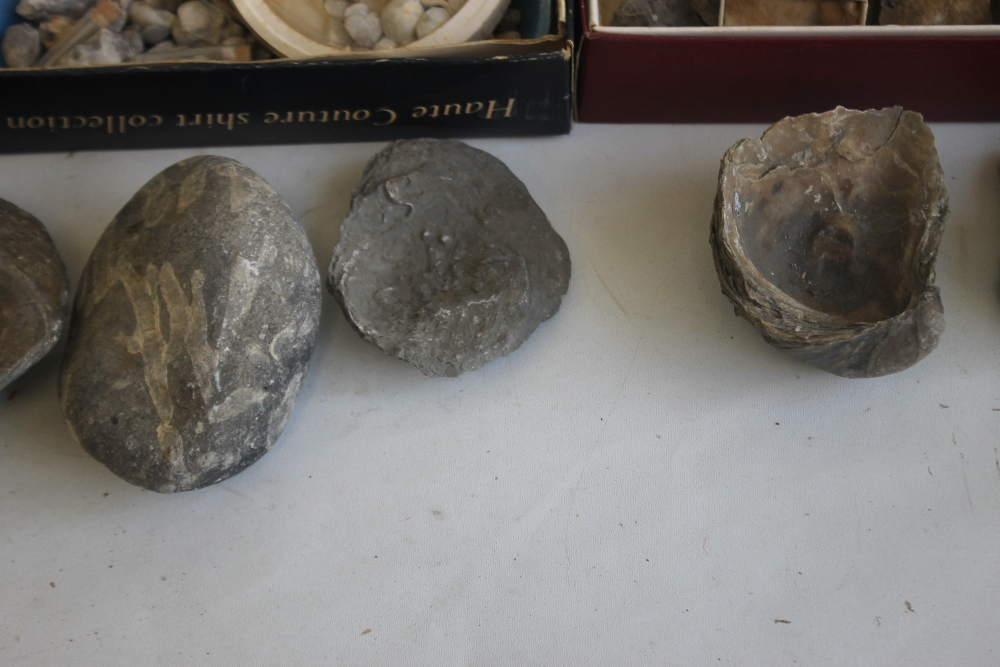 THREE TRAYS OF ASSORTED FOSSILS, to include gastropods, amonites etc - Image 6 of 9