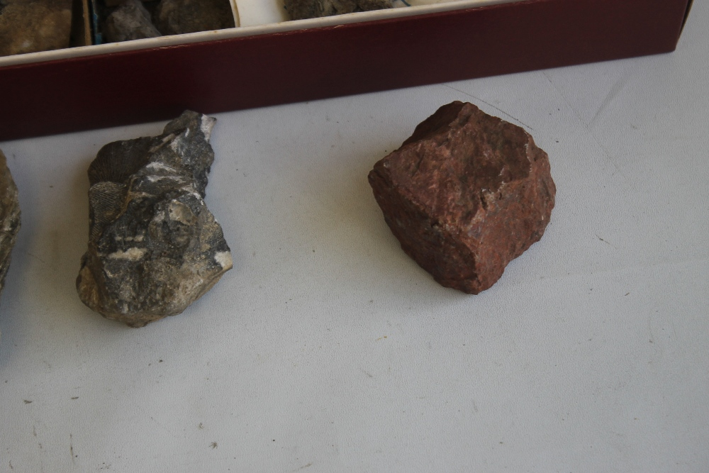 THREE TRAYS OF ASSORTED FOSSILS, to include gastropods, amonites etc - Image 7 of 9