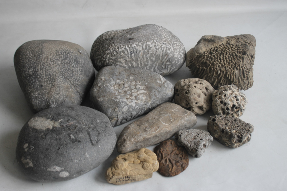 A COLLECTION OF FOSSILS MAINLY IN LARGE BOLDER FORM, to include a coprolite (fossilized poo)