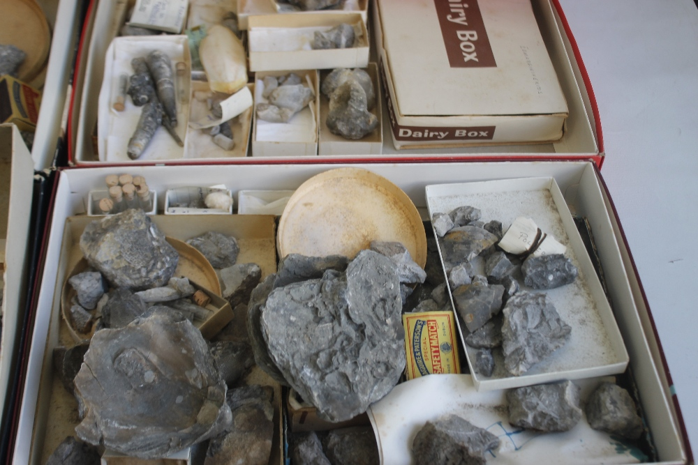 THREE TRAYS OF ASSORTED FOSSILS, to include gastropods, amonites etc - Image 4 of 9