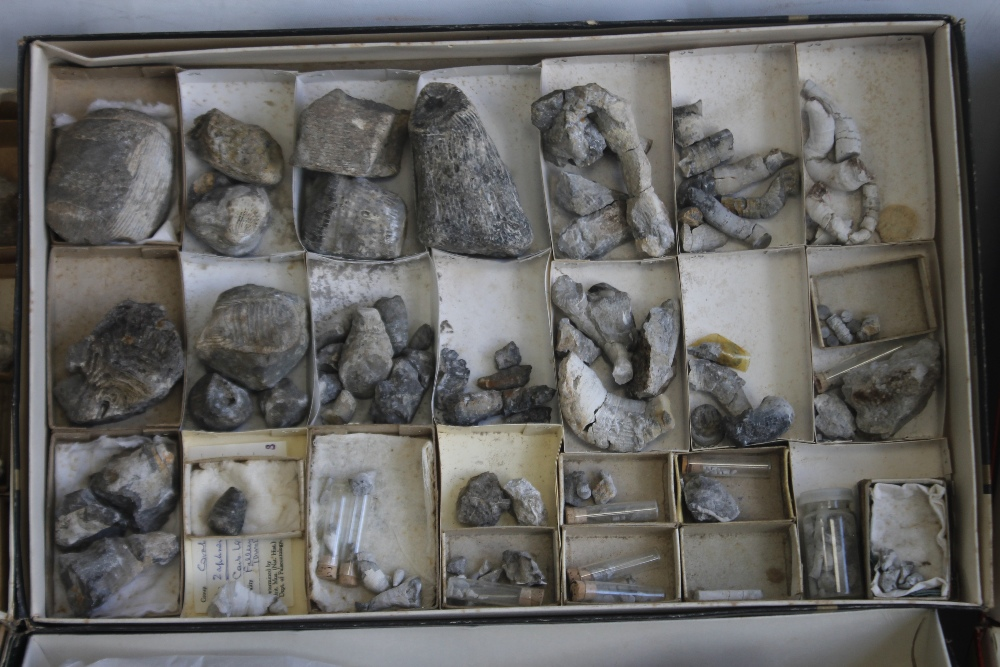 THREE TRAYS OF ASSORTED FOSSILS, to include gastropods, amonites etc - Image 3 of 9