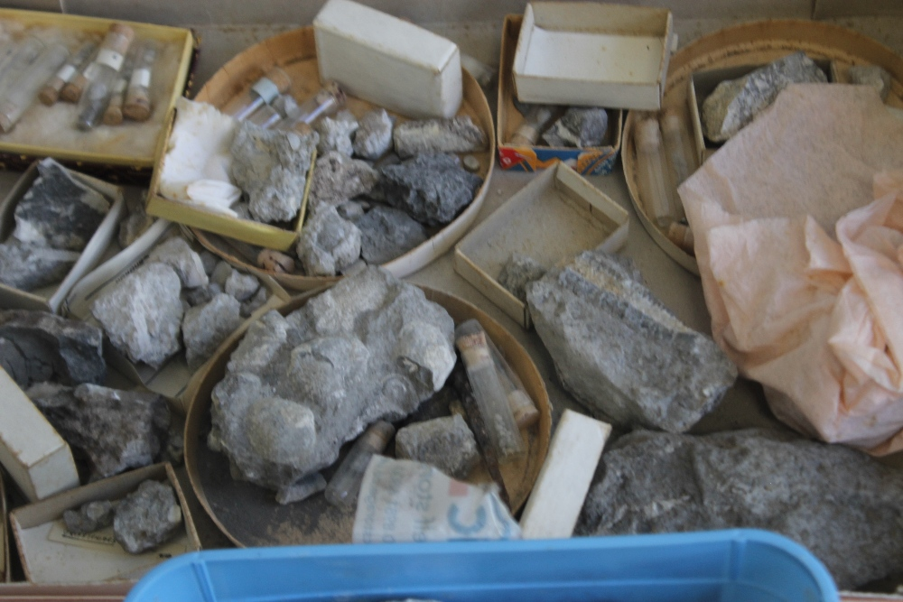THREE TRAYS OF ASSORTED FOSSILS, to include gastropods, amonites etc - Image 9 of 9