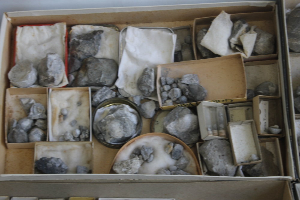 THREE TRAYS OF ASSORTED FOSSILS, to include gastropods, amonites etc - Image 2 of 9