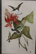 A FRAMED AND GLAZED MIXED MEDIA OF HUMMING BIRDS, SIGNED A.COOPER '79 LOWER RIGHT, OVERALL HEIGHT 74