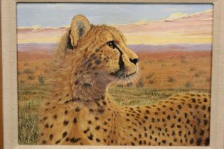 LINDEN S COOKE (b.1961).A FRAMED OIL ON PANEL OF A YOUNG CHEETAH, INITIALED LSC LOWER LEFT,