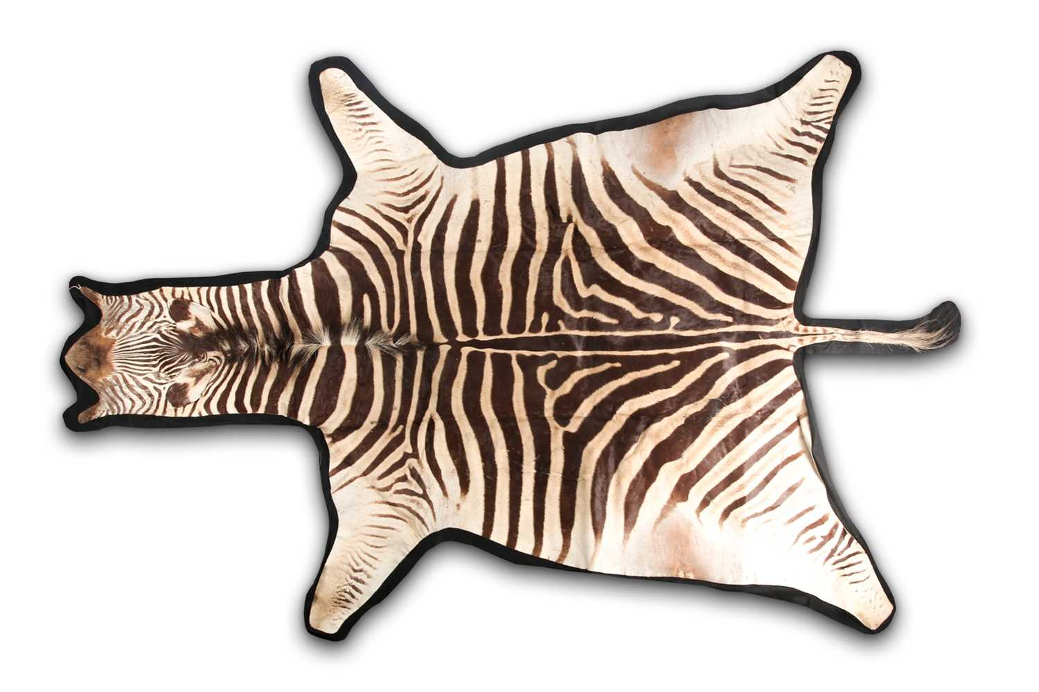A large fabric-backed Zebra skin rug with an unblocked head. 285 cm long x 195 cm wideCondition