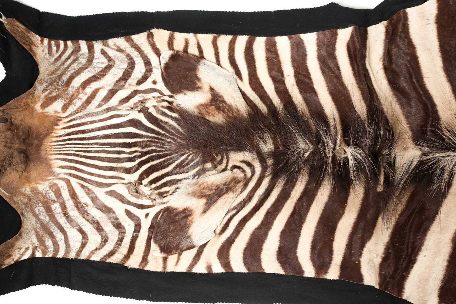 A large fabric-backed Zebra skin rug with an unblocked head. 285 cm long x 195 cm wideCondition - Image 3 of 3