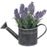 LAVENDER PLANT IN WATERING CAN