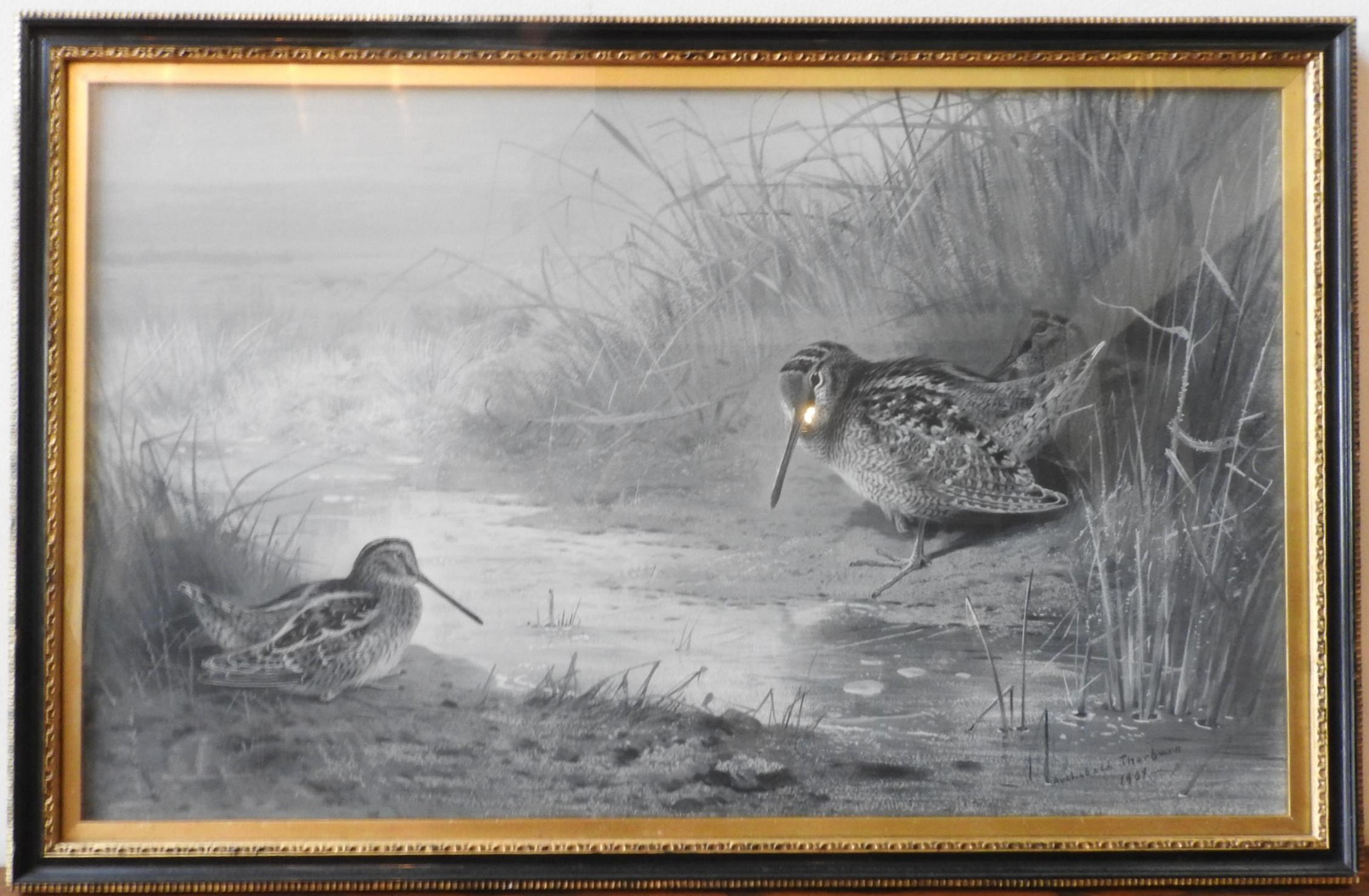 ARCHIBALD THORBURN (1860-1935), water colour of two snipes, 1909, 42 x 69 cm