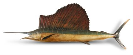 A MODEL OF A SAILFISH, EARLY 20TH CENTURY