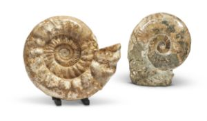 TWO AMMONITE FOSSILS