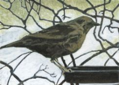 Helen Fay, Mrs Blackbird, 2020