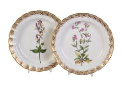 A pair of Derby botanical plates
