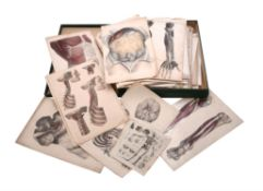 A collection of lithographic anatomical prints
