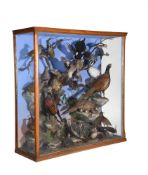 Y A late Victorian oak and glazed mixed case of preserved British birds