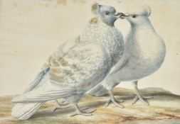 A Drost (Continental early 19th century), A pair of 'fancy' pigeons- possibly Capuchine