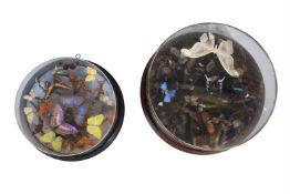 Y A circular case of preserved butterflies