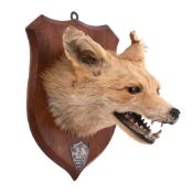 A preserved fox mask