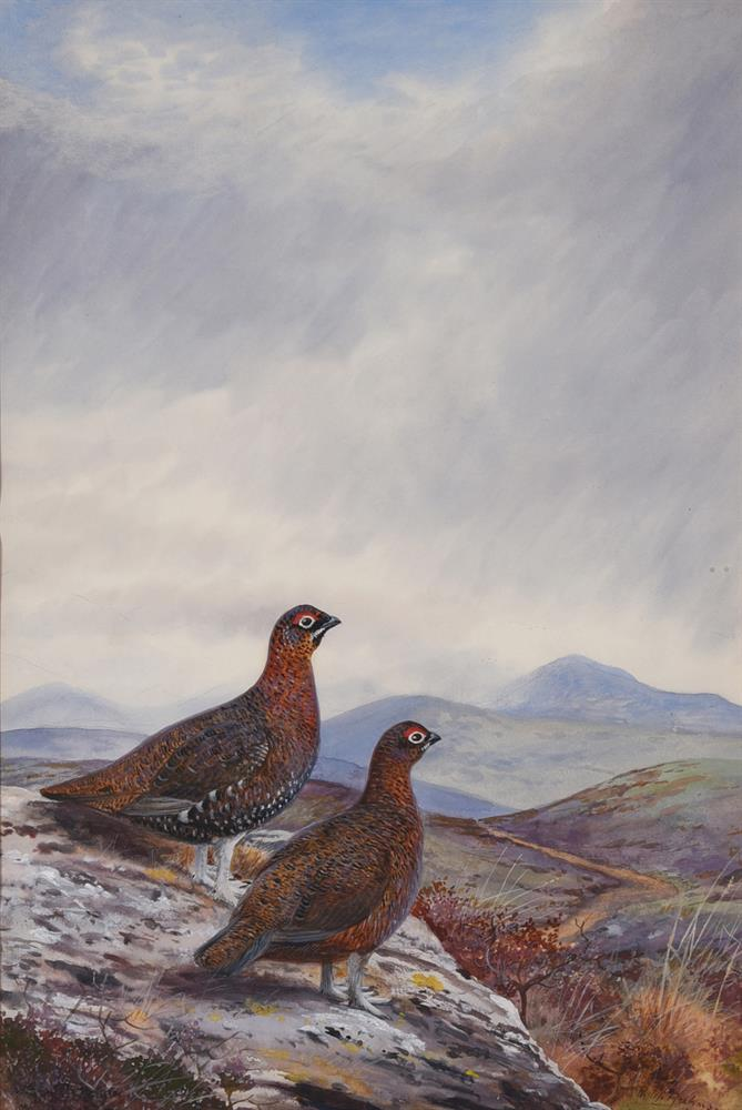 PHILIP RICKMAN (BRITISH 1891-1982), GROUSE ON A ROCK - Image 2 of 2