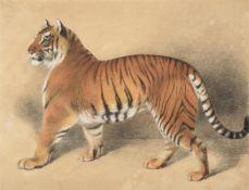 THOMAS LANDSEER (BRITISH 1795-1880), A TIGER