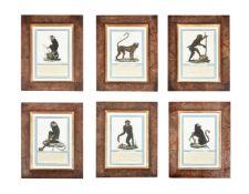 A set of 9 prints of exotic monkeys