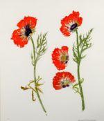 λ Elizabeth Blackadder (British b.1931), 'Poppy Study'