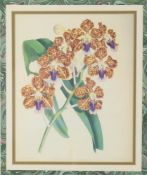 After John Nugent Fitch, A set of four floral lithographs