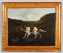 J Freeman (Early 19th century British) 'Springer or Setter Spaniel'