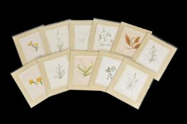 Emily Stackhouse (British 1811-1870), Flower studies, a set of eleven