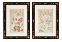 After David Dietrich, A set of 8 bookplates of 'Rosa' from 'Flora Universalis'