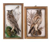 Y A preserved model of an owl