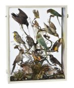 Y A white painted cased diorama of exotic birds