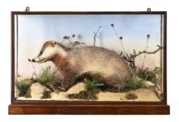 Y A group of four glazed and cased examples of British taxidermy
