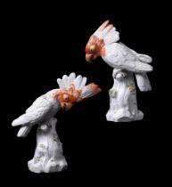 A pair of modern Meissen cockatoos