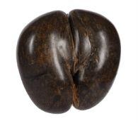 A coco de mer nut, Lodoicea maldivica,