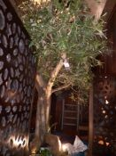 Artificial Olive Tree, Approx. 6', Located at 14 Leicester Square, London WC2H 7NG