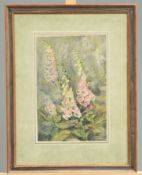 ~ KATE GERBER (20TH CENTURY), FOXGLOVES, signed lower right, watercolour, framed, 36.5cm by 24cm;