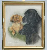~ MARJORIE COX (1915-2003), STUDY OF DOGS, signed and dated 1985, pastel, framed. 55cm by 49cm