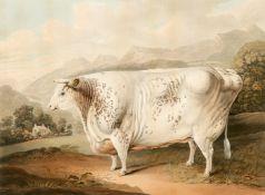 CHARLES TURNER (1773-1857) AFTER G HORNER OF MANCHESTER, THE YORKSHIRE ROSE