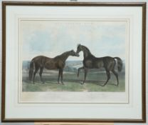 """AFTER HERRING, """"THE BRITISH STUD"""""""