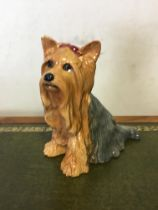 Large beswick Yorkshire Terrier
