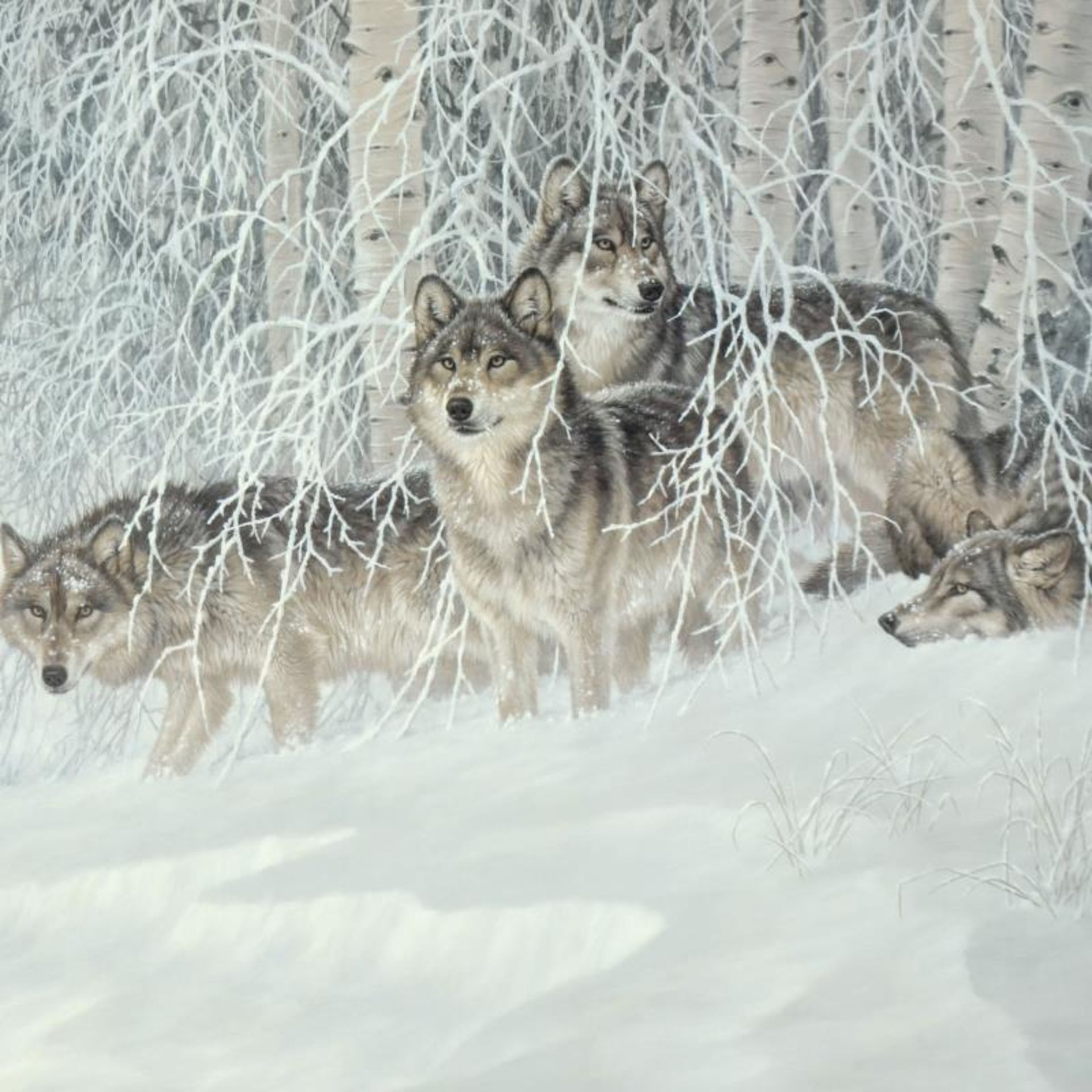 """Larry Fanning (1938-2014), """"Winter's Lace - Gray Wolves"""" Limited Edition Lithogr - Image 2 of 3"""