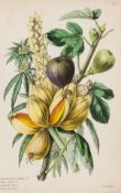 Botany.- Thornton (Robert John) A Family Herbal, hand-coloured wood-engravings by Thomas Bewick, …