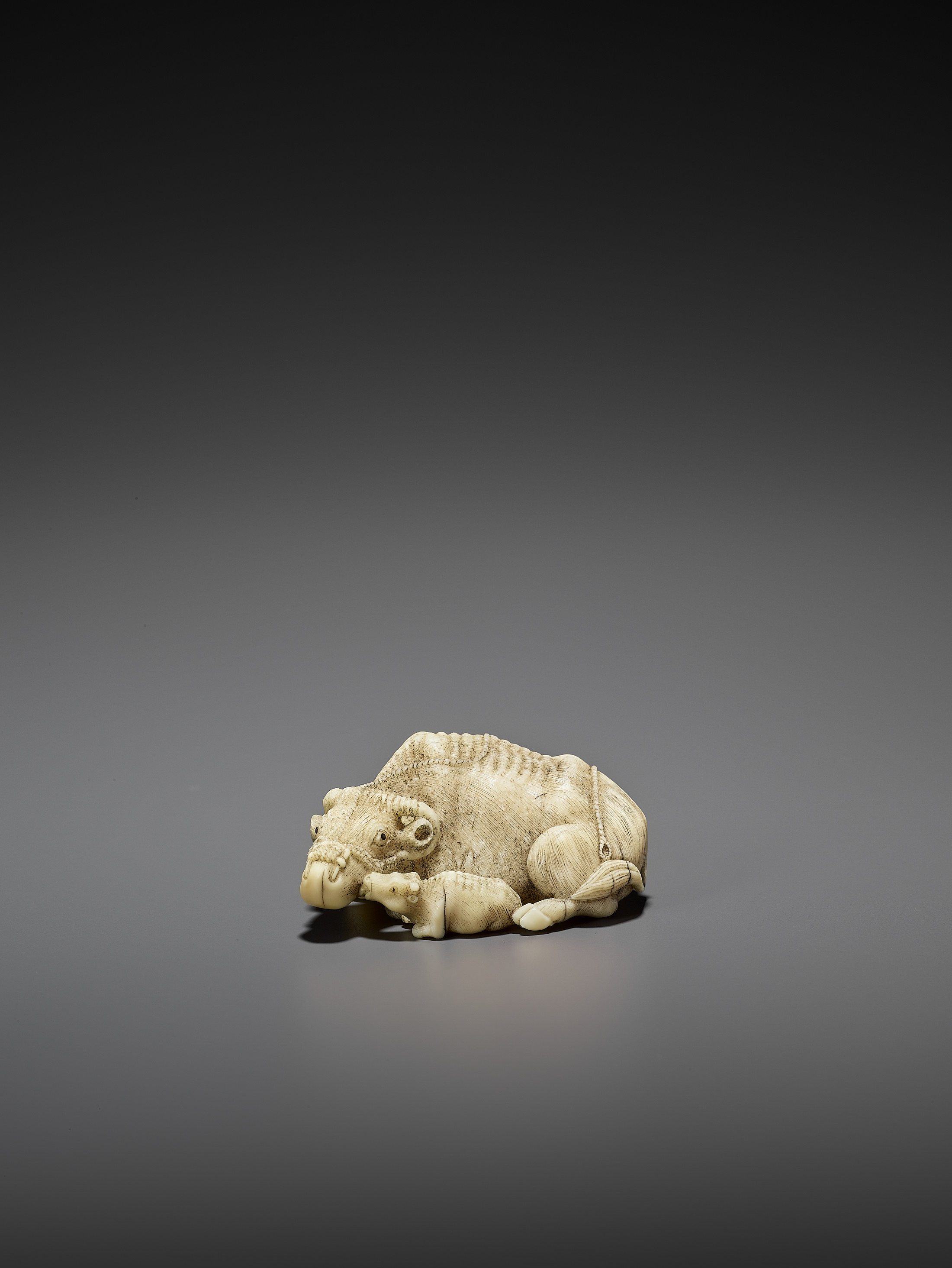 MITSUCHIKA: A LARGE AND RARE WALRUS IVORY NETSUKE OF A RECUMBENT COW WITH CALF - Image 3 of 3